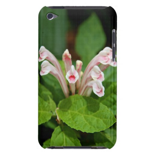 Pink Skullcap Case-Mate iPod Touch Barely There Case-Mate iPod Touch Case