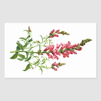 Pink Snapdragon Drawn From Nature Rectangular Sticker