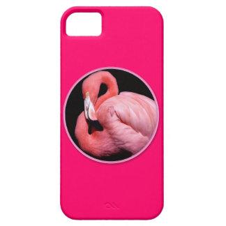 Pink South Florida Flamingo Waterbird iPhone 5 Cover