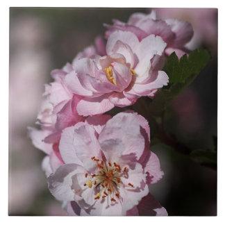 Pink Spring Blossom Display Tile