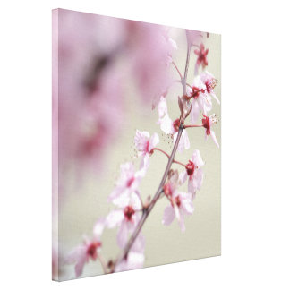 Pink Spring Blossoms Stretched Canvas Print
