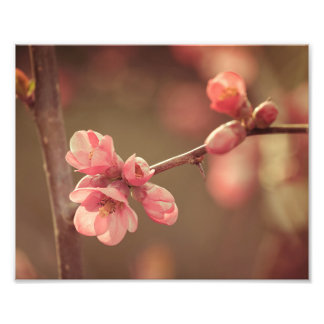 Pink Spring Blossoms Photo Print