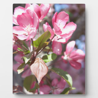 Pink Spring Flower Blossoms Plaque