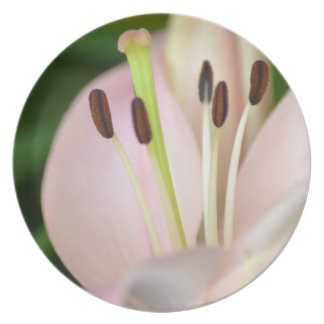 Pink Spring Lily Flower Dinner Plates