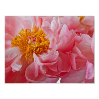 Pink Spring Peony Flower - Peonies Template Poster