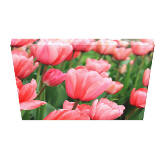 Pink Spring Tulips Canvas Wall Print