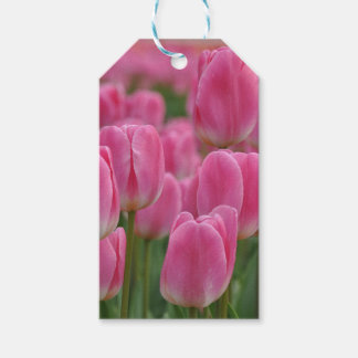 Pink spring tulips floral print gift tags