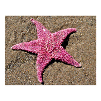 Pink Starfish Postcard