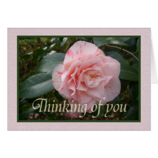 Pink striped Camellia. Thinking of you. Greeting Card