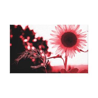 Pink sunflower canvas print