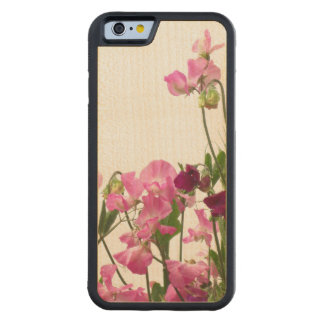 Pink Sweet Peas Carved® Maple iPhone 6 Bumper