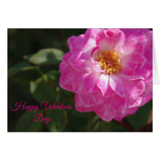 Pink Tea Rose Valentine Card
