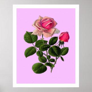 Pink Tea Roses Poster