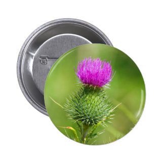 Pink thistle flower button, pin, great gift idea 6 cm round badge