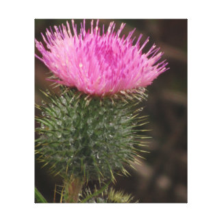 Pink Thistle Flower Gallery Wrap Canvas