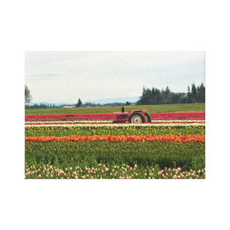 Pink Tractor in Tulip Field Canvas Print