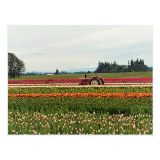 Pink Tractor in Tulip Field Postcard