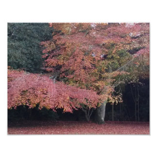 Pink tree decorative autumn colours poster