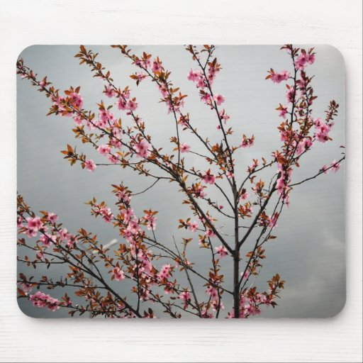 Pink tree flowers mouse pads