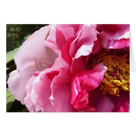 Pink Tree Peony Notecard