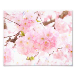 Pink Tree Sakura Cherry Blossom Photo Print