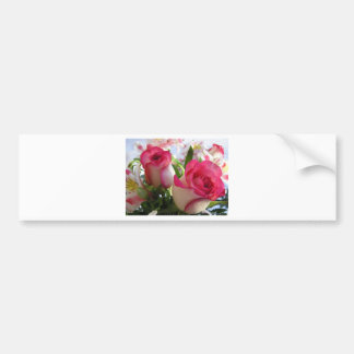 Pink Trimmed Roses Bumper Sticker