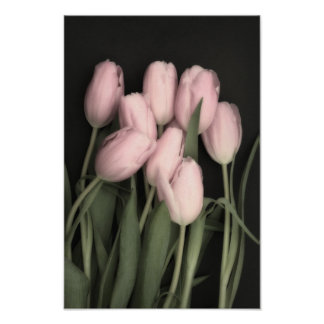Pink Tulip Bouquet Poster