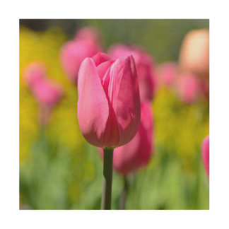 Pink Tulip in the Garden Wood Wall Art