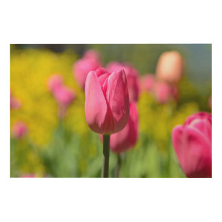 Pink Tulip in the Garden Wood Wall Decor