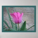 Pink Tulip Print