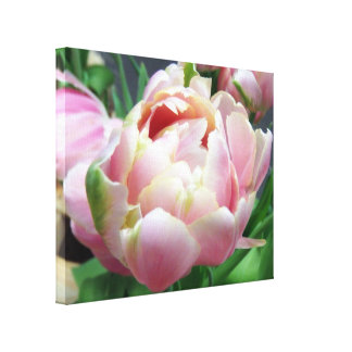 Pink Tulips Canvas Print by Snap Daddy