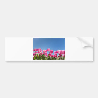 Pink tulips field with blue sky bumper sticker