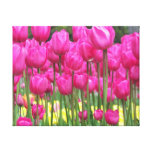 Pink Tulips Gallery Wrap Canvas