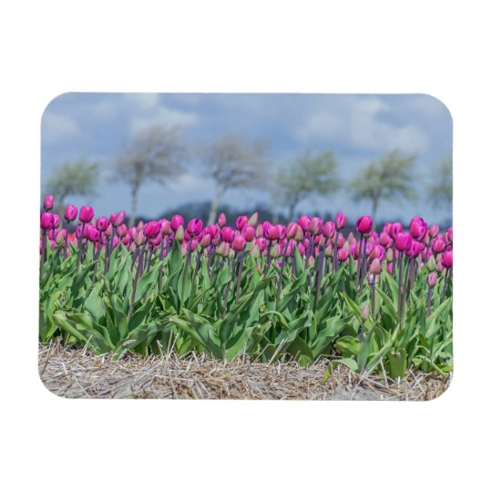 Pink tulips in a field fridge magnet