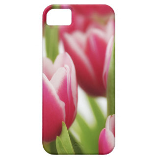 Pink tulips iPhone 5 case