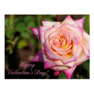 Pink Valentine Rose Postcard