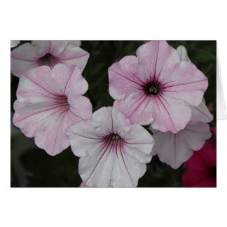 Pink Vein Shockwave Petunias Card