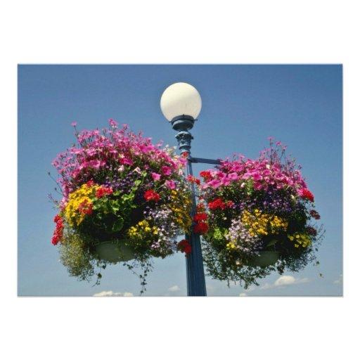 Pink Victoria's famed hanging flower baskets, Cana Custom Invites