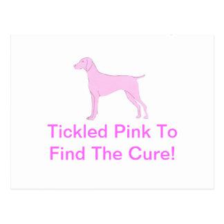 Pink Vizsla Postcard