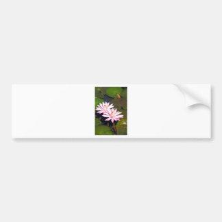 Pink water lilies in pond bumper sticker