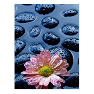 Pink water lily against blue stones postcard