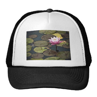 Pink Water Lily Drawing Trucker Hats
