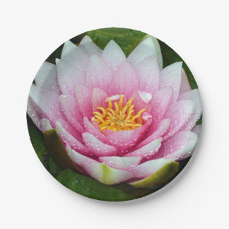 Pink water lily floral print paper plate