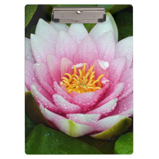 Pink water lily flower clipboard