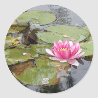 Pink Water Lily Flower Photograph Sticker