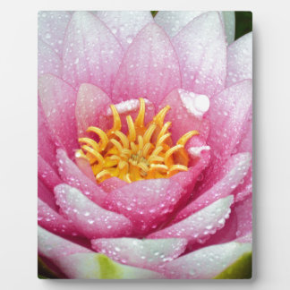 PInk water lily flower Plaque