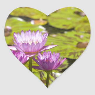 pink water lily heart sticker
