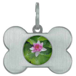 Pink Water Lily On Green Pads Photography Pet Tag
