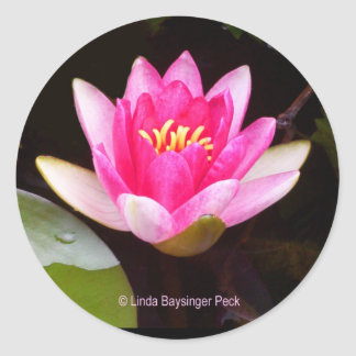 Pink Water lily Round Sticker