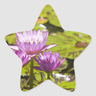 pink water lily star stickers